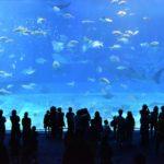 初デートは水族館に決まり!デートが上手くいく方法と理由を徹底解説