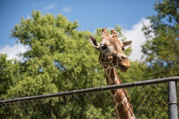 動物園デートのポイントと注意点!オススメの理由と楽しみ方とは